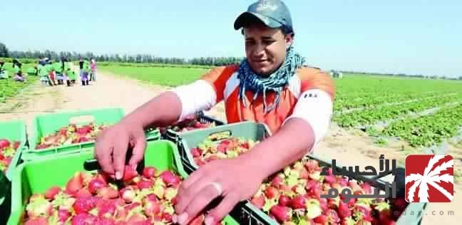 حظر استيراد الفراولة المصرية اعتبارًا من الشهر المقبل